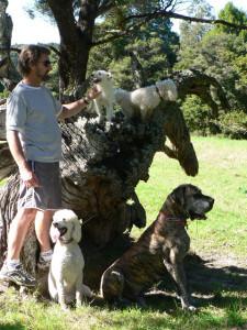 Doggy Walk 2