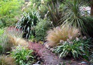 native-new-zealand-garden