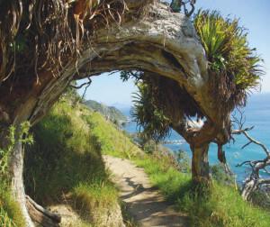 Cliff Top Walk_2-3