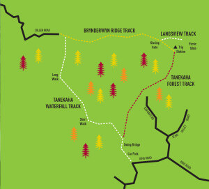 Tanekaha Loop Map