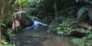 Tanekaha Falls/Puriri Track – NEW