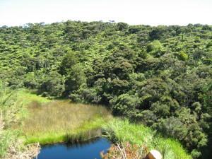 Natural Treasures Te Arai walk Jan 10 006